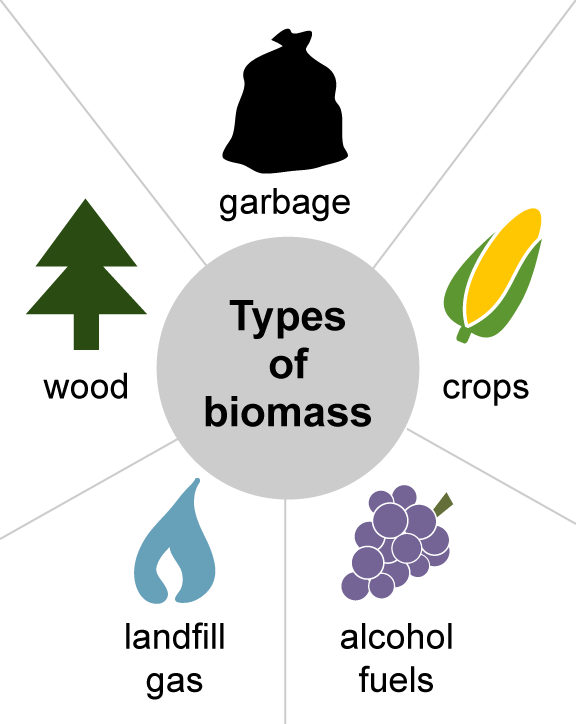 How to generate electricity form biomass